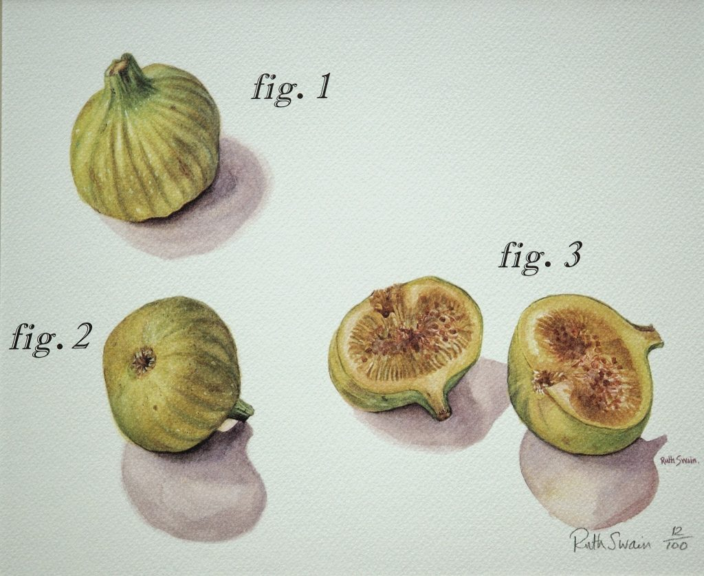 Fig 1. Watercolour 36 x 30 cms